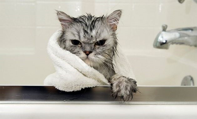 อุปกรณ์กรูมมิ่งสำหรับแมว ที่ทาสแมวจำเป็นต้องมีติดไว้