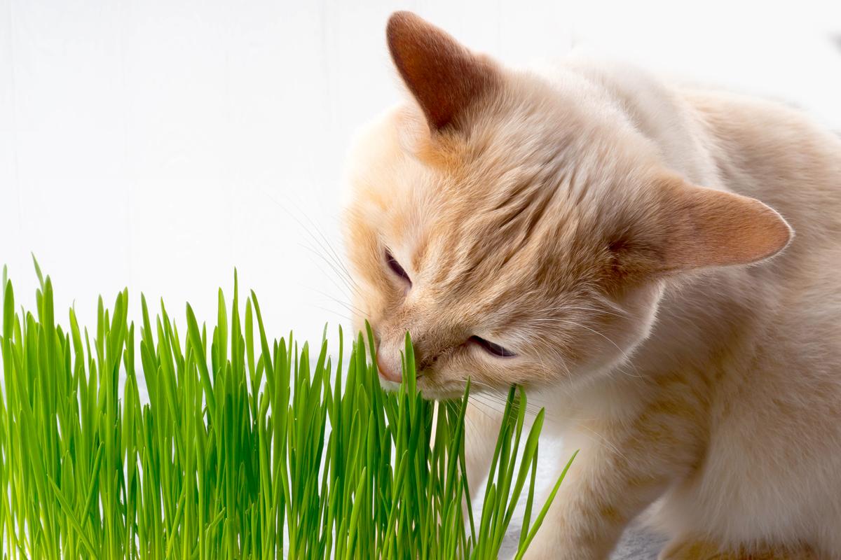 ต้นไม้ที่แมวกินได้ แถมยังปลูกง่ายและมีประโยชน์ต่อแมวด้วย