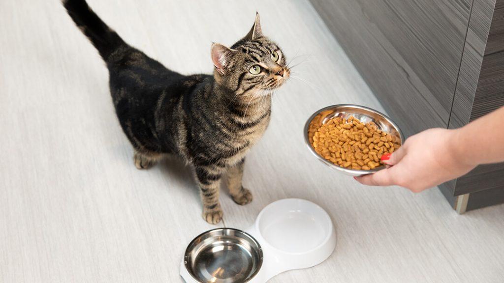 ยี่ห้ออาหารแมวเกรดพรีเมี่ยม อาหารแมวที่มีคุณค่าทางโภชนาการ