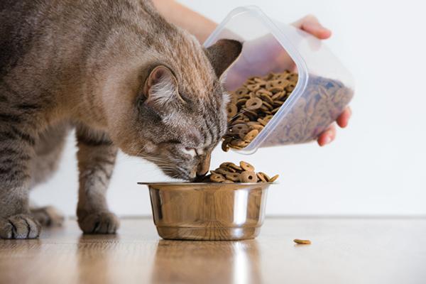 ยี่ห้ออาหารแมวเกรดพรีเมี่ยม