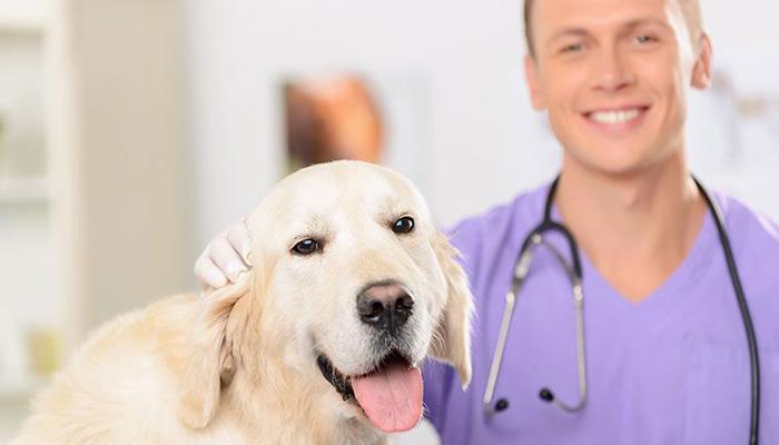 โรคผิวหนังในสัตว์เลี้ยง มาทำความรู้จักวิธีป้องกันเพื่อให้สัตว์เลี้ยงปลอดภัย