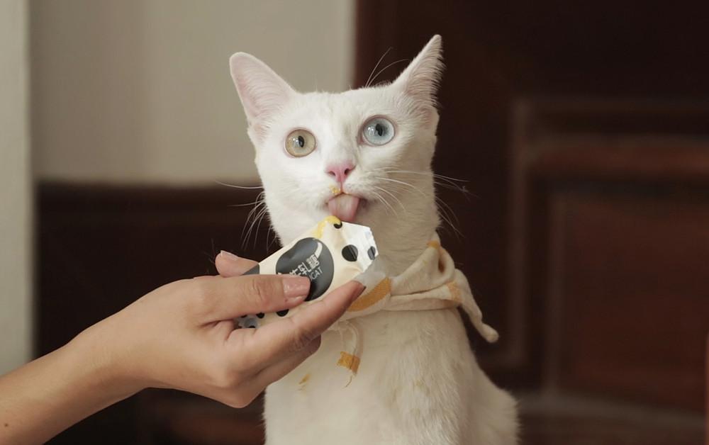 วิธีเลือกขนมแมวเลีย ให้เหมาะกับโอกาสถือเป็นขนมรางวัลของเจ้าเหมียว