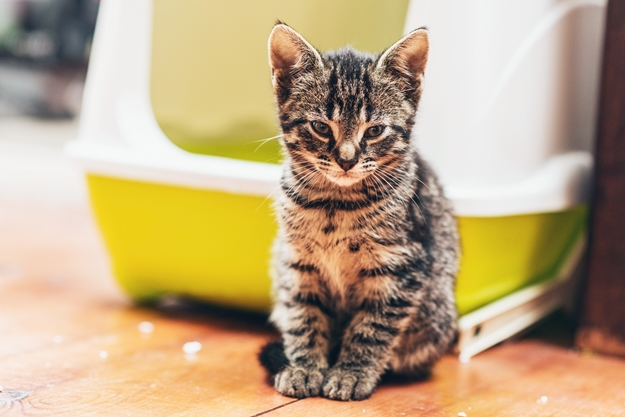 การเลี้ยงแมวในคอนโด