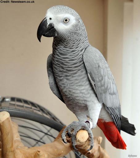 นกแอฟริกัน