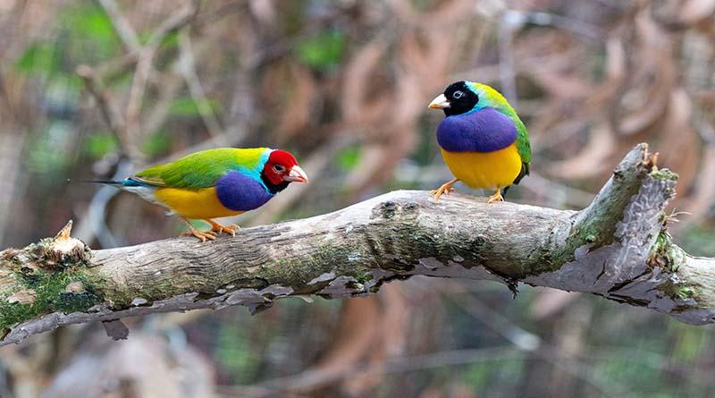 นก สวยงาม สัตว์เลี้ยงมีเสน่ห์ใครได้เลี้ยงจะต้องหลงรักทุกคน