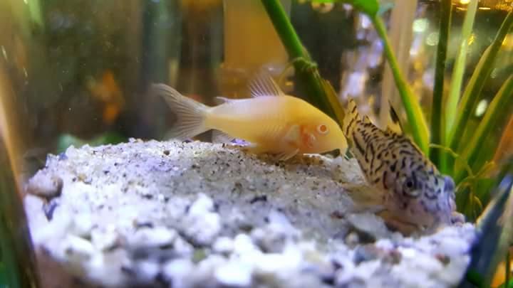 ปลาสวยงาม สัตว์เลี้ยงที่ช่วยเพิ่มความสุขทางใจ และเพิ่มสุนทรียทางสายตา