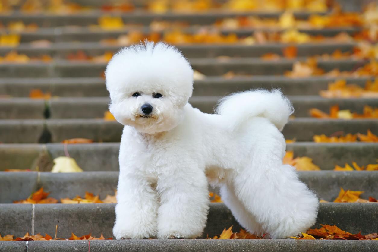 สุนัขพันธุ์เล็ก สายพันธุ์สัตว์เลี้ยงน่ารักจากโซนนอก