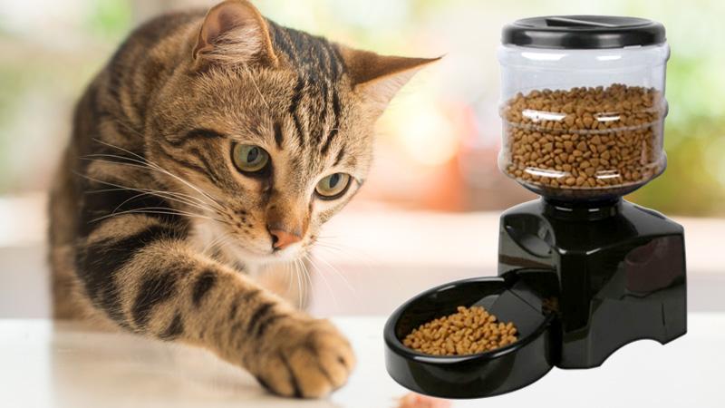 เครื่องให้อาหารอัตโนมัติสำหรับแมว