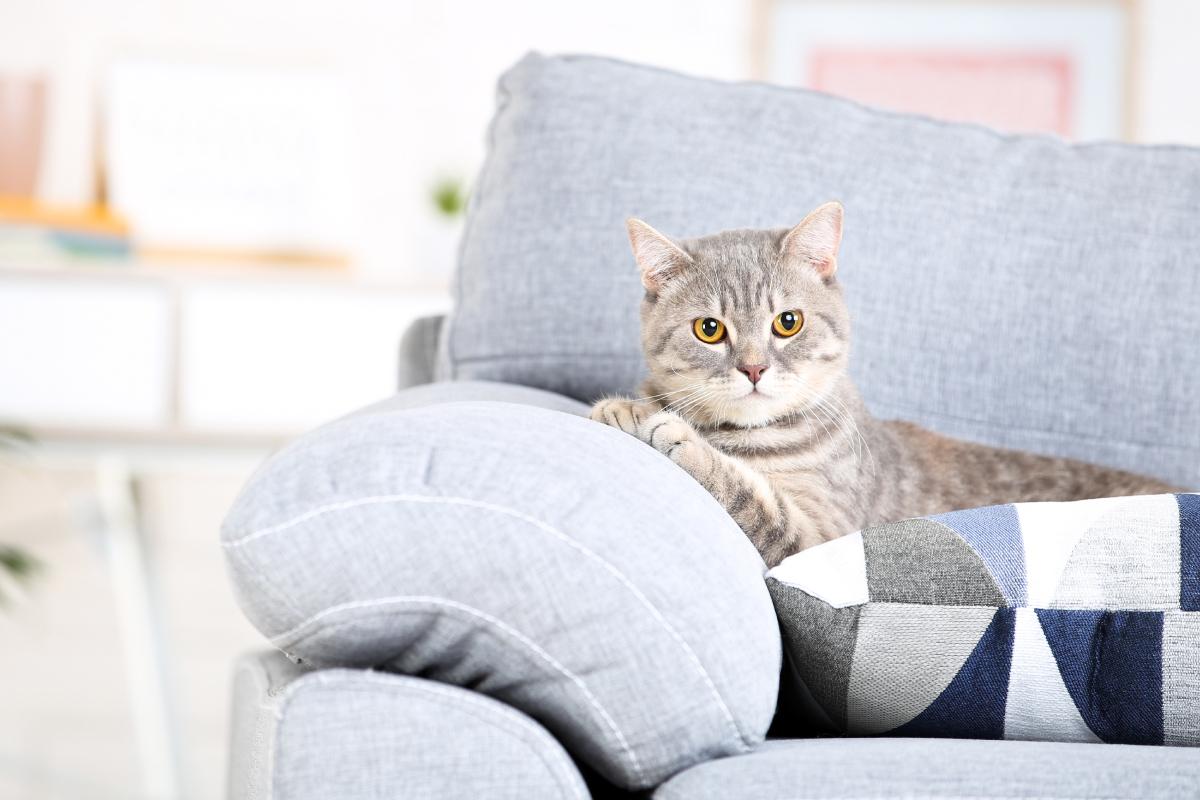 การเลี้ยงแมวในคอนโด ที่ต้องเลือกสายพันธุ์ที่เหมาะสม
