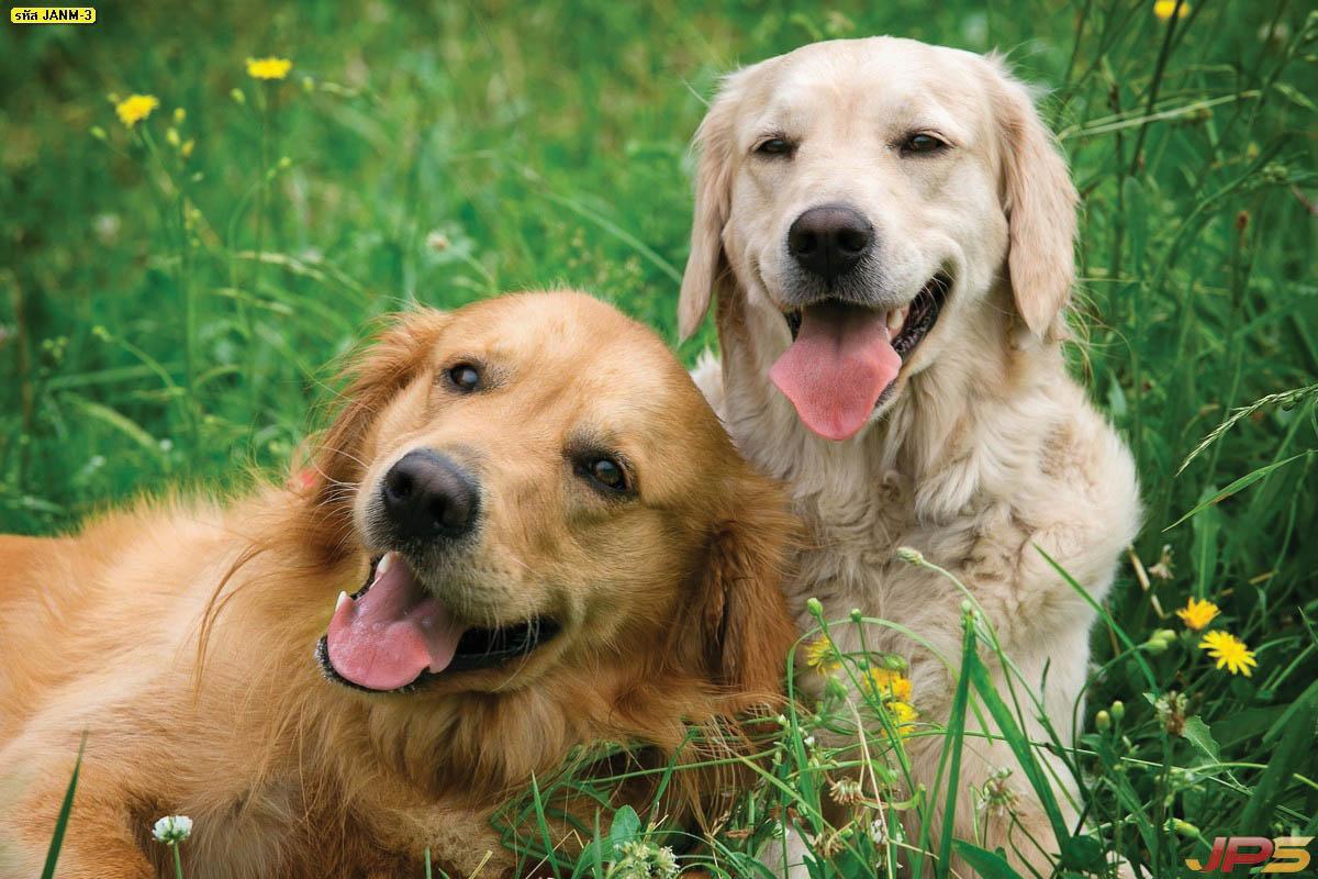 ข้อมูลการเลี้ยงสุนัข สัตว์เลี้ยงที่ซื่อสัตย์ผู้เลี้ยงสุขใจ สุนัขมีความสุข