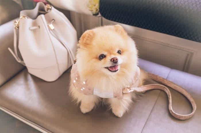 สุนัขสายพันธุ์น่ารัก สัตว์เลี้ยงคลายเหงาที่คนนิยมเลี้ยงมากที่สุดในโลก