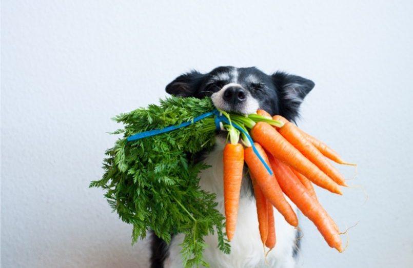 สุนัขและแมวกินผักได้หรือไม่ คำถามที่หลายคนยังสงสัย